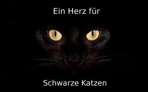 Widescreen-hd-wallpaper-animals-black-cat-hd-wallpaper-high2