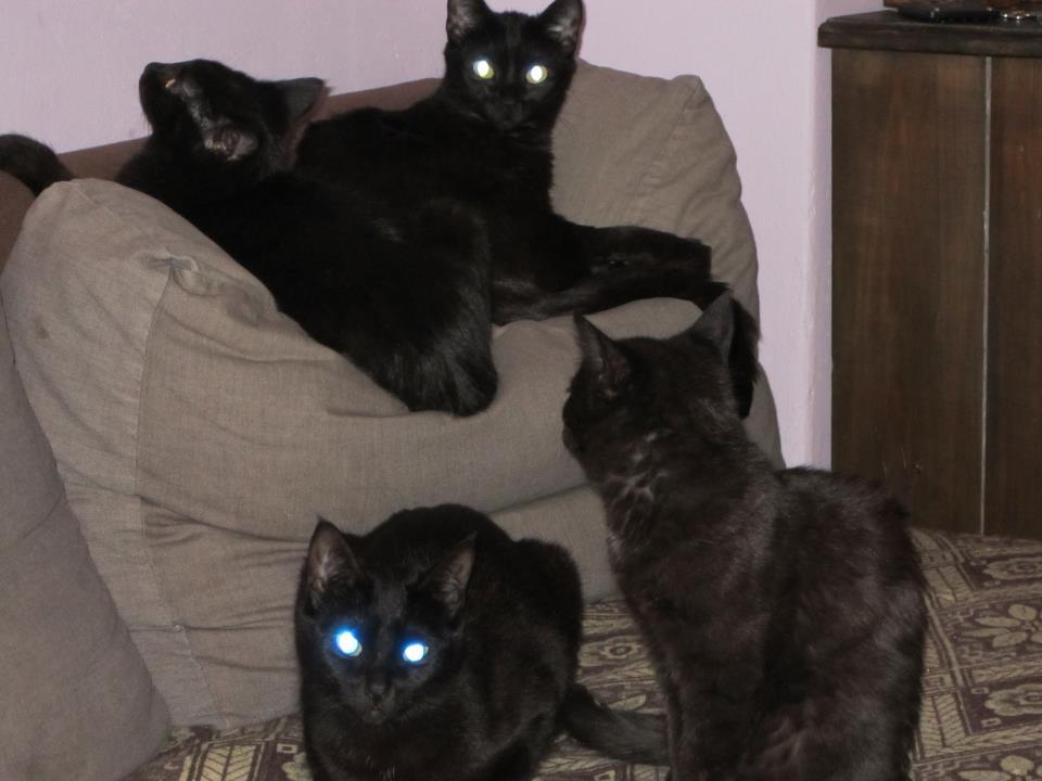 freitag der 13 schwarze katze neues aus der hexenk che. Black Bedroom Furniture Sets. Home Design Ideas