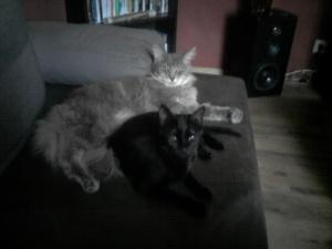 Katzennamen fur schwarzen kater
